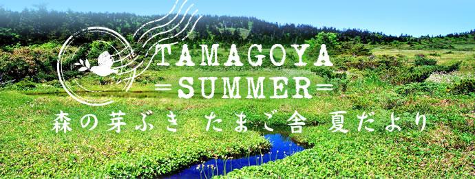 TAMAGOYA =SUMMER= 森の芽ぶき たまご舎 夏だより