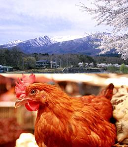 蔵王の自然と養鶏所の鶏とたまごかけご飯のイメージ